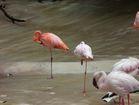Vegas celebs participate in #FlamingoChallenge