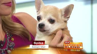 Pick Of The Litter: Spike