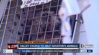 Vegas couple driving to Houston to help animals