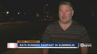 Summerlin residents freaked out by rats
