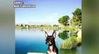 Woman claims dog was killed at NLV dog park