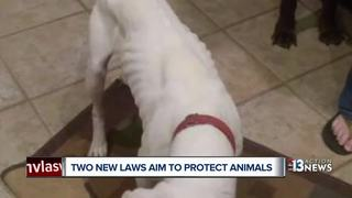 Two new laws to protect Nevada animals
