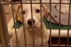 Law says pet shops can only sell rescue animals