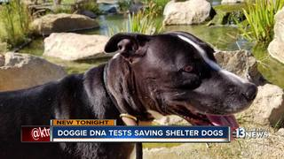 The Animal Foundation is DNA testing their dogs