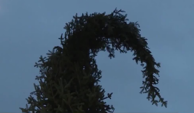 ugly christmas tree in montreal celebrates imperfection - Ugly Christmas Trees