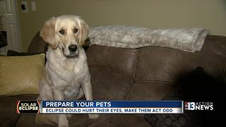How to prepare your pets for the solar eclipse