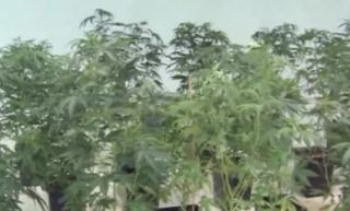Commission votes to ban marijuana ads at airport
