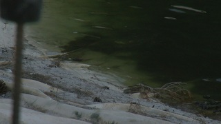Queensridge residents concerned about turtles