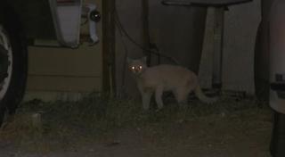 Local agencies tackling our feral cat problem