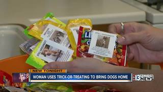 Woman uses Halloween to bring missing dogs home