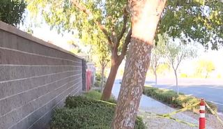 Woman at war with HOA over tree troubles