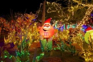 Ethel M turns on holiday lights in cactus garden