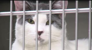 Henderson Animal Shelter almost no-kill