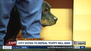 City council votes to repeal 'Puppy Mill Ban'