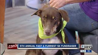 5th annual Fast and Furriest 5K Fundraiser