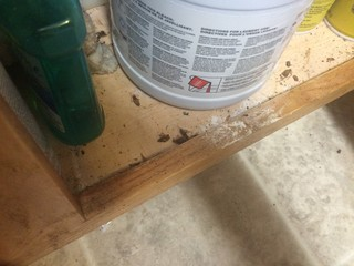 Senior tenants complain of roach infestation