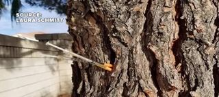 Mom spots hypodermic needles stuck in tree
