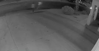 Serial 'eggers' caught on camera