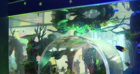 'Tanked' sets up new aquarium in Zappos nap room