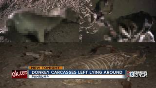 Donkey carcasses are smelly problem in Pahrump
