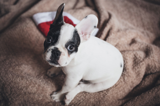 Best holiday gifts for pets and their people
