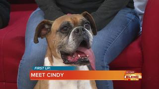 Pick Of The Litter: Cindy