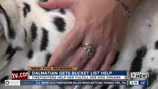 Firefighters help senior dog with bucket list