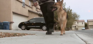 Man, dog patrols neighborhood after break-in