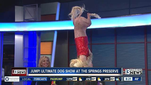 Jump- The Ultimate Dog Show at the Springs Preserve