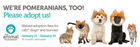 Animal Foundation offering free adoptions