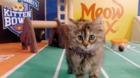 Animal shelters celebrate Kitten Bowl V