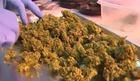Marijuana classes popping up around Las Vegas