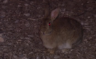 State reaches out to animal control for bunnies