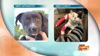 Picks Of The Litter: Affagoto & Chevy