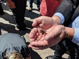 PHOTOS: Butterfly release at Healing Garden
