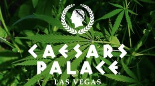 Caesars dropping pre-employment marijuana test