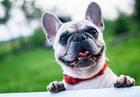 Las Vegas woman creates app for dog caregivers