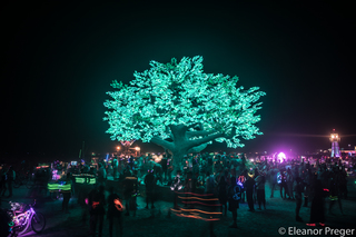 World's largest wormwood tree art installation