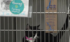 Animal Foundation waiving adoption fees Aug. 18