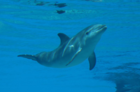 Mirage dolphin calf named after Las Vegas sports