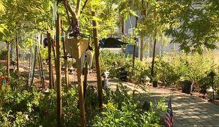 How collaboration grew the Healing Garden