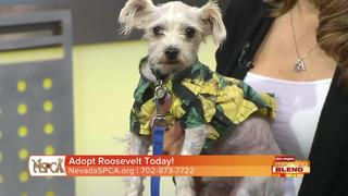 This Week's Pick Of The Litter: Roosevelt