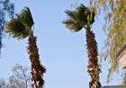 Wind advisory, freeze alerts in Southern Nevada