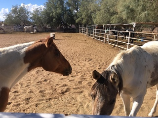 Fight over horses leads to legal tug-o-war